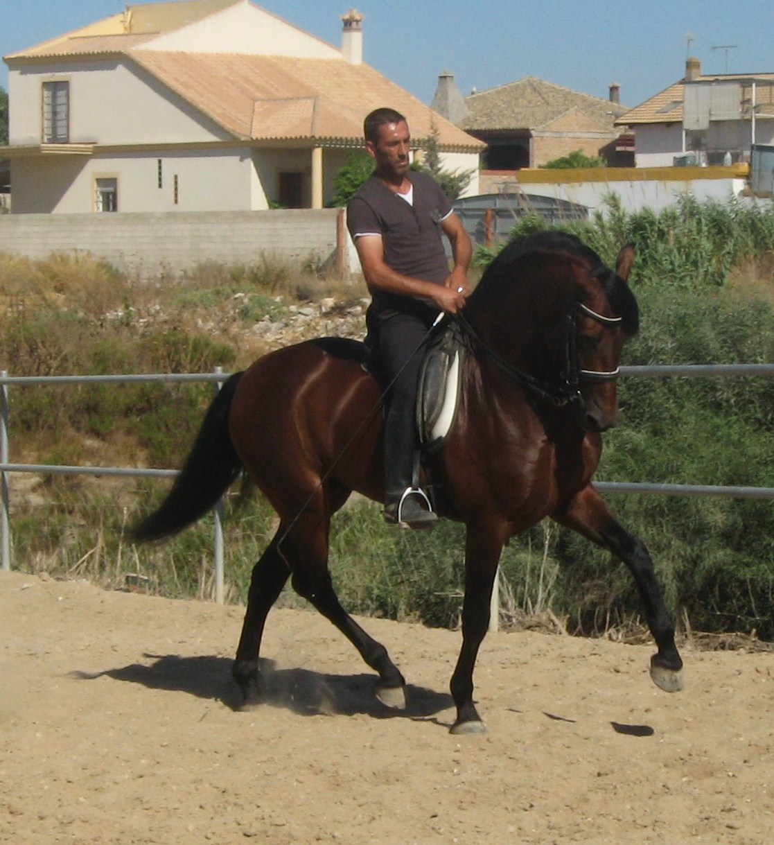 Pics Photos - Pictures Andalusian Horses For Sale Horse ...