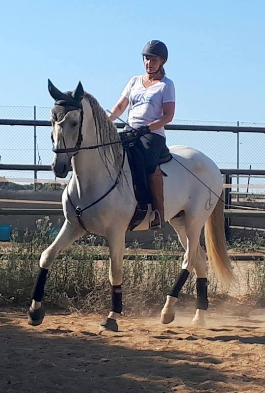 Classical Dressage Course Lesson Packages